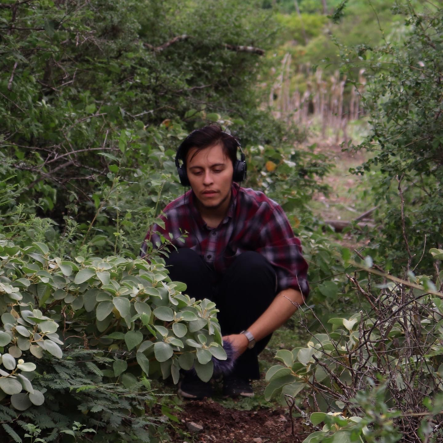 A light skin mestizo man squats down surrounded by thick green bushes. He uses black over-the-ear headphones to listen intently to sounds picked up through an audio recorder in his hand but obscured by the foliage. He is wearing a burgundy and grey plaid flannel and black pants.